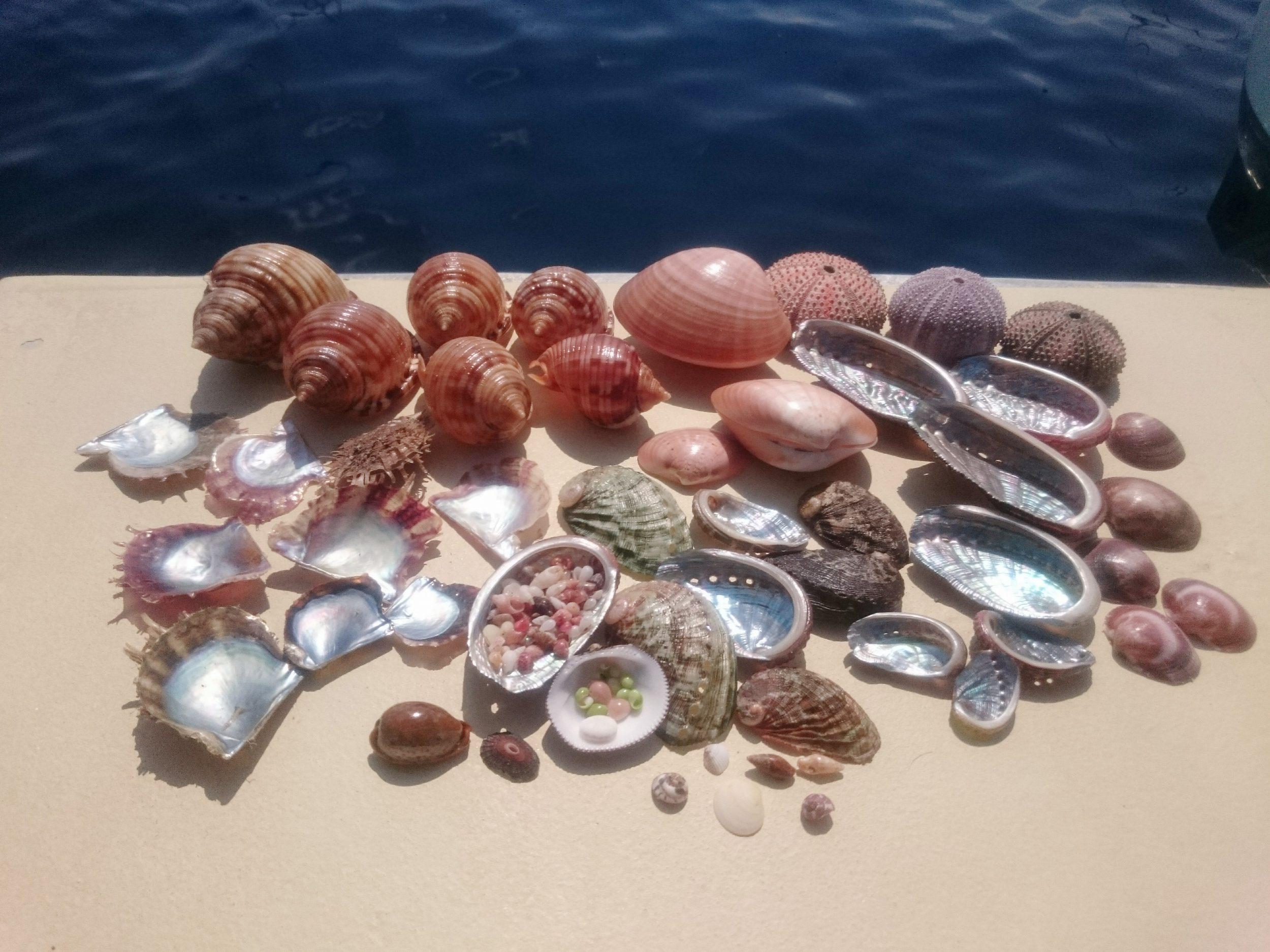 coquillages variés sur la plage arrière d'un bateau.
