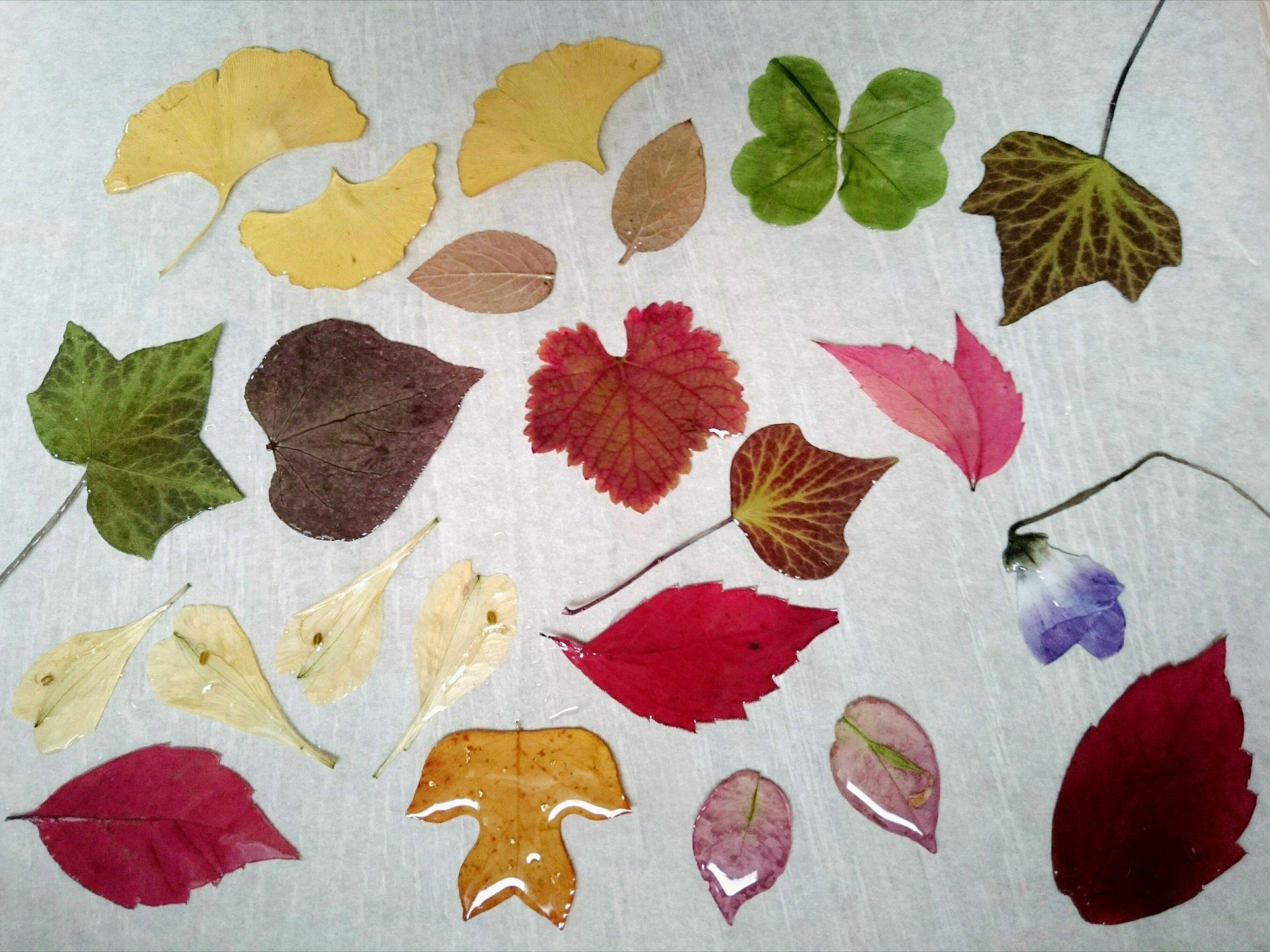 végétaux pendant les étapes de résinage : vigne, feuille coeur, lierre, ginkgo, tulip tree, orchidée, alstroméria, treffle à quatre feuilles...