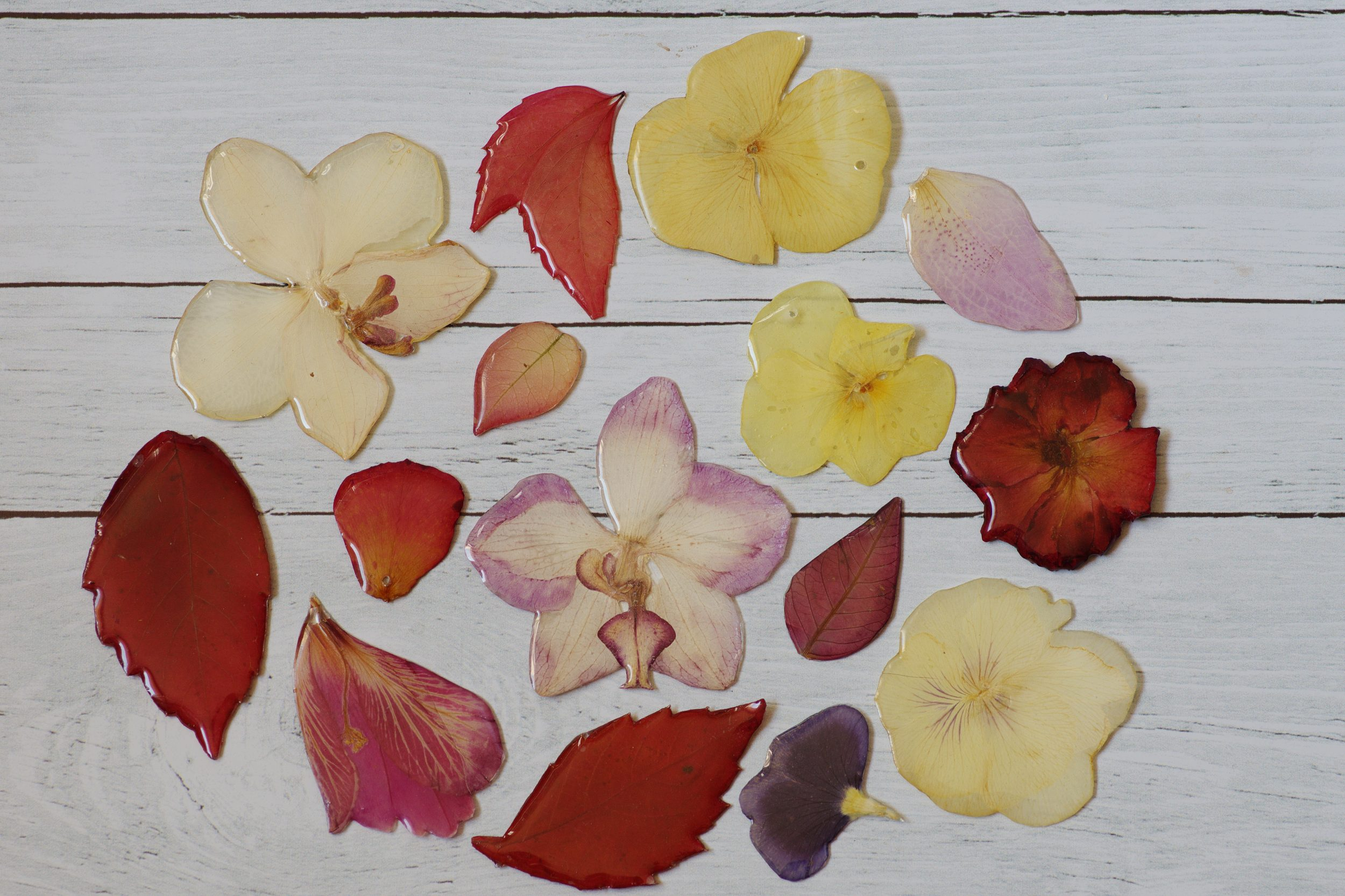 végétaux en train de sécher : orchidées, pensées, hibiscus, poinsetia, roses, vigne vierge,