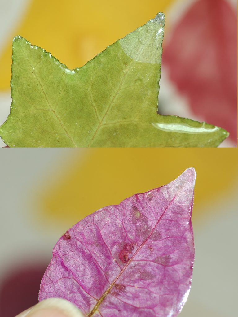 une feuille et une fleur ont la résine qui se décolle