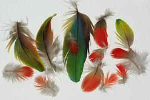 plumes rouges vertes et jaunes de perrouet ara