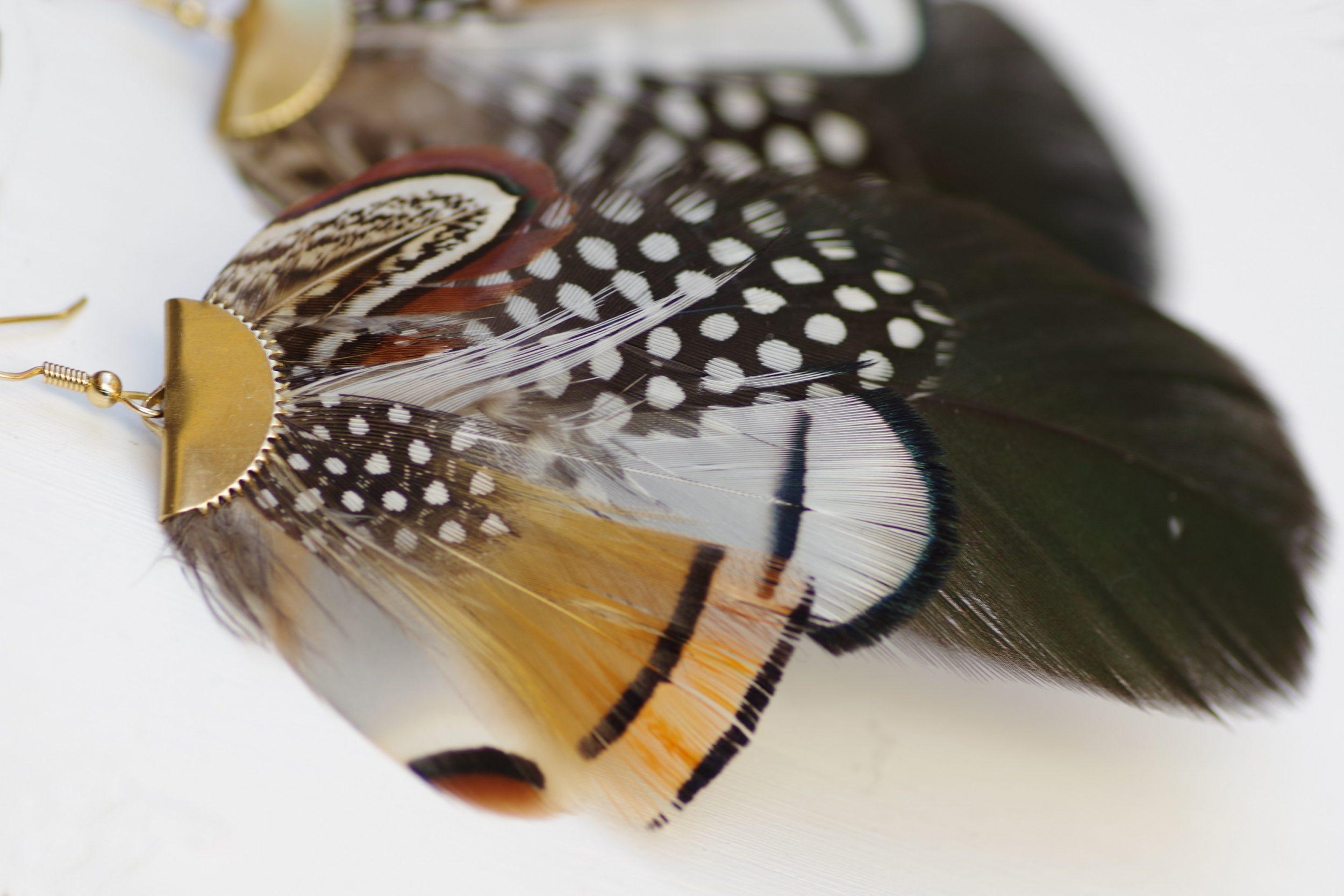 détail des plumes rayées et à pois , blanches, orange et noires
