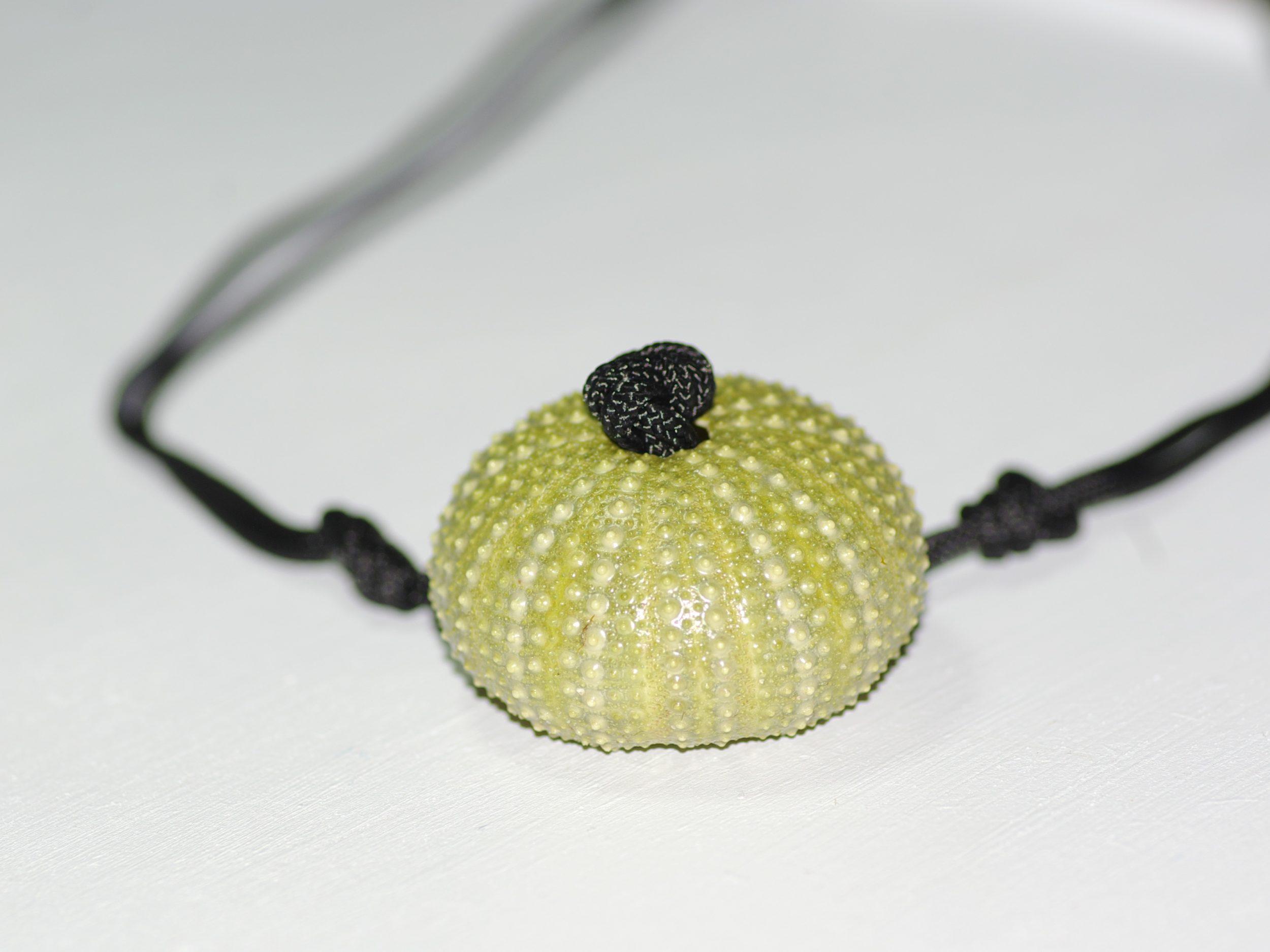 oursin vert transformé en pendentif sur une cordelette noire nouée, gros plan