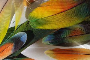 lot de plumes très colorées de perruches et perroquets : jaune, orange, vert...