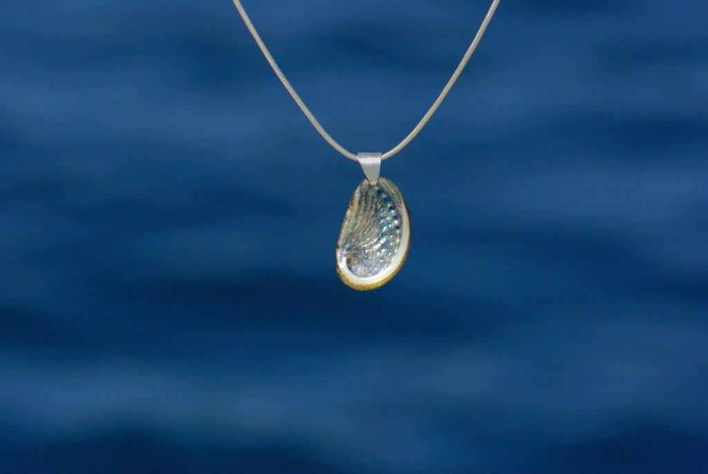 ormeau à la nacre très brillante argentée, sur une chaîne argentée