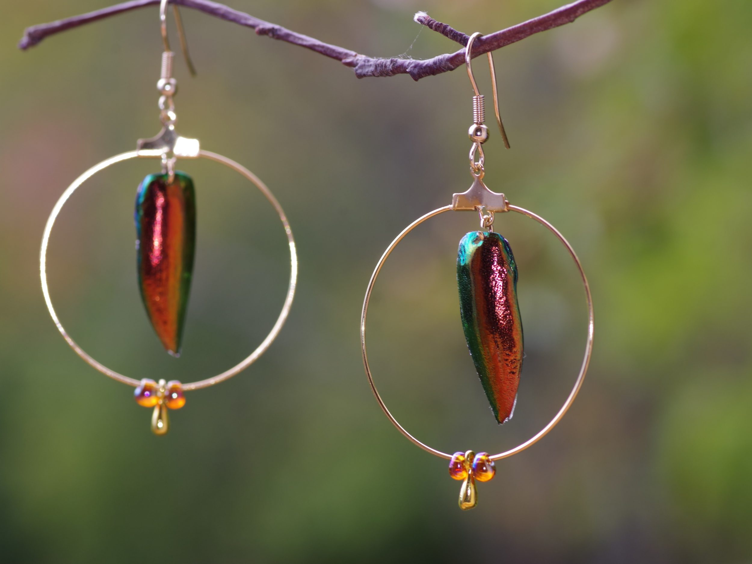 boucles d'oreilles avec des élytres cuivrés de scarabées à l'intérieur d'un anneau doré, trois petites gouttes pendent sous l'anneau.