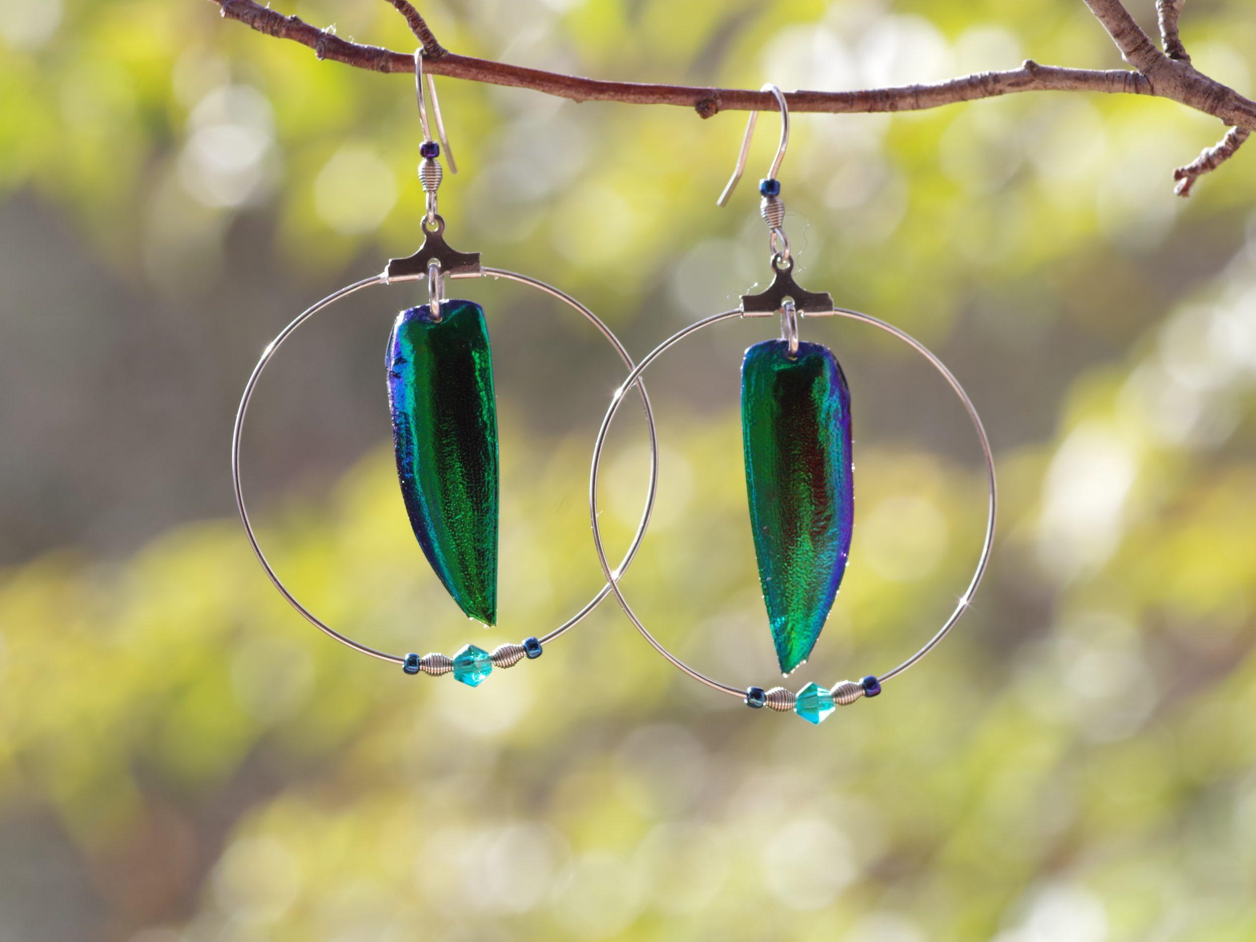 Boucles d'oreilles en inox avec un bel élytre bleu-vert aux reflets métalliques dans un grand anneau, agrémenté de petites perles assorties