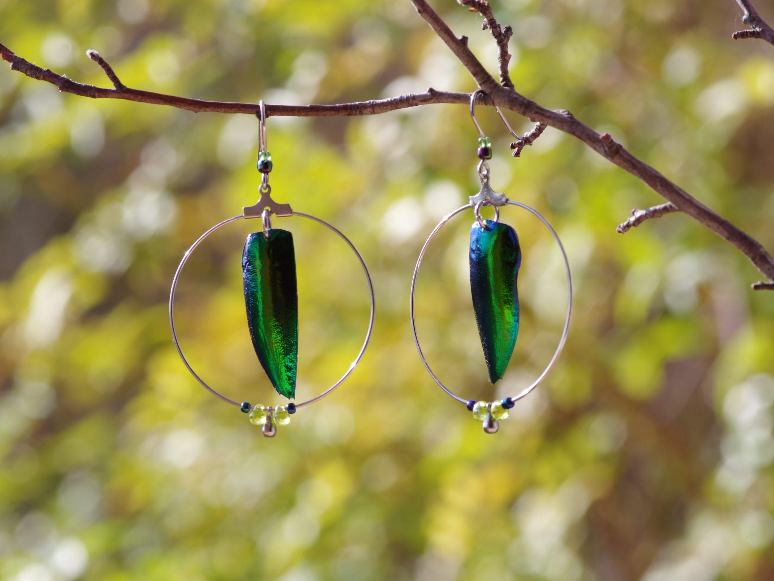 boucles d'oreilles avec des élytres de scarabées vert-bleu à l'intérieur de grands anneaux en inox