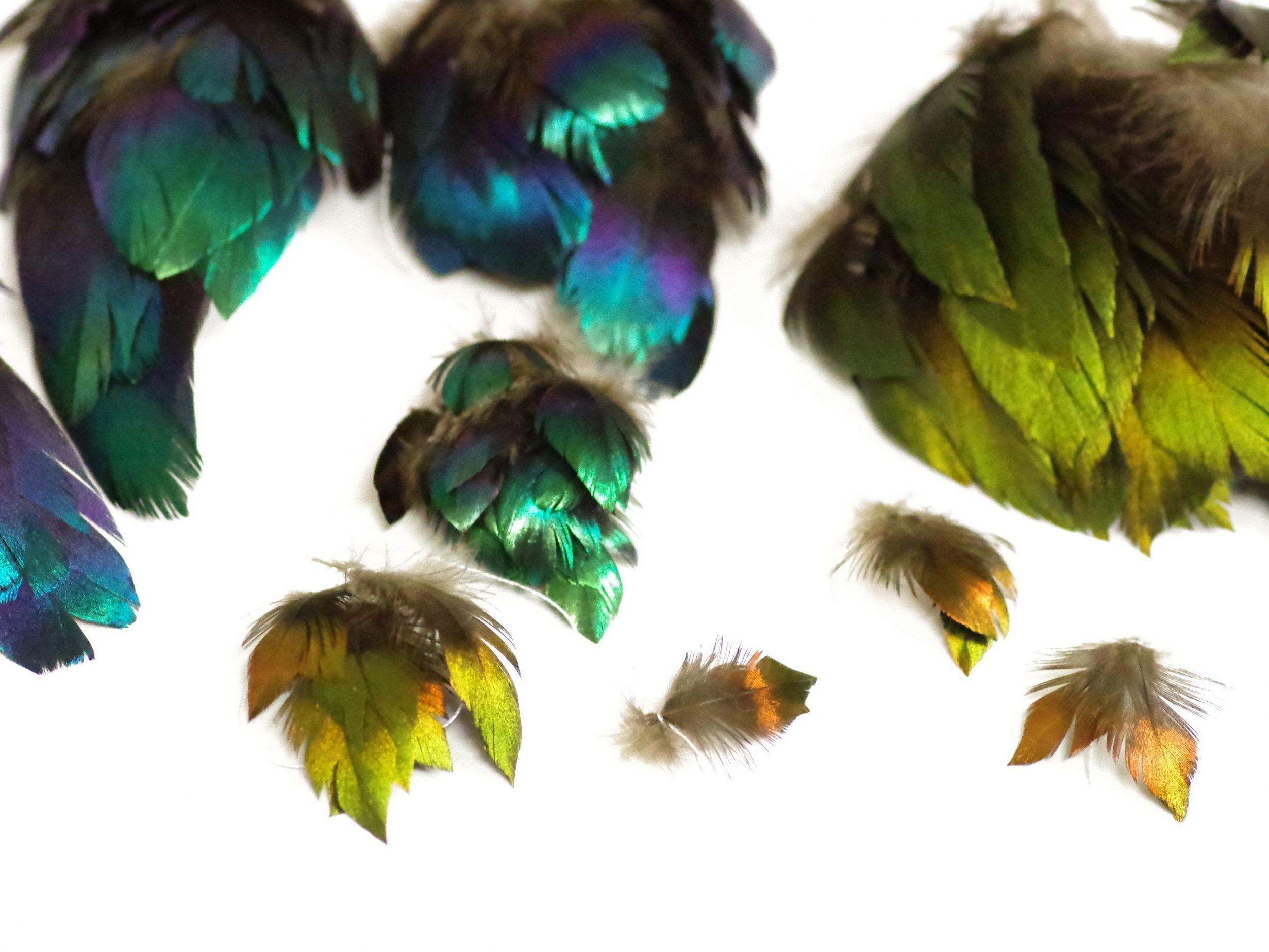 plumes de lophophore triées par couleur